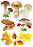 Mushroom_set — Stock Vector