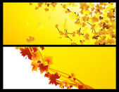 Autumnal backgrounds — Stock Vector