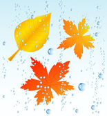 Autumnal leaf in the rain — Stock Vector