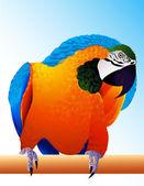 Parrot — Stock Vector