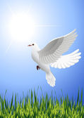 White_dove_flying_above_summer_field — Vetorial Stock