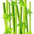 Stock Vector: Bamboo on isolated background