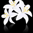 Lily flowers on black backgound — Stock Vector