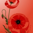 Poppy background — Stock Vector