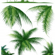 Stock Vector: Tropical_leaf1