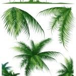 Tropical_leaf1 — Stock Vector