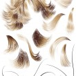 Stock Vector: Hair