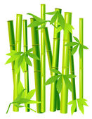 Bamboo on isolated background — Stock Vector