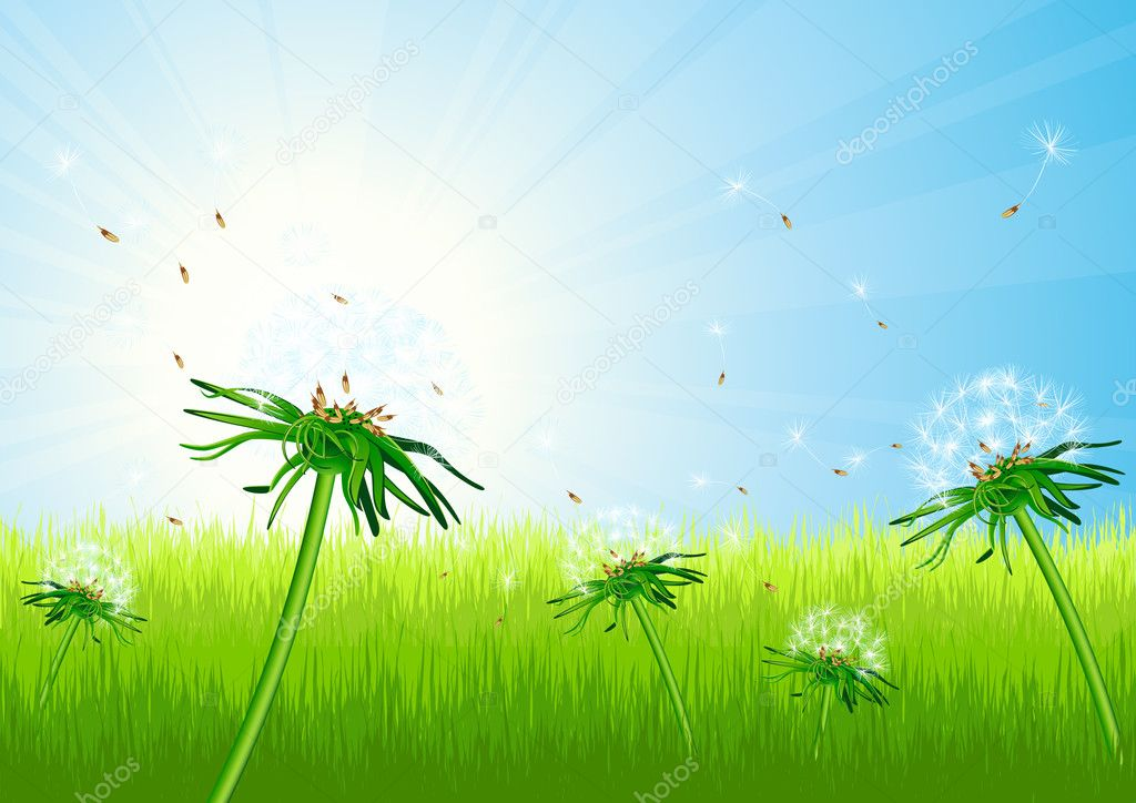 Dandelion field, vector illustration — Stock Vector #1708291