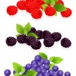 Forest berries — Stock Vector #1811838