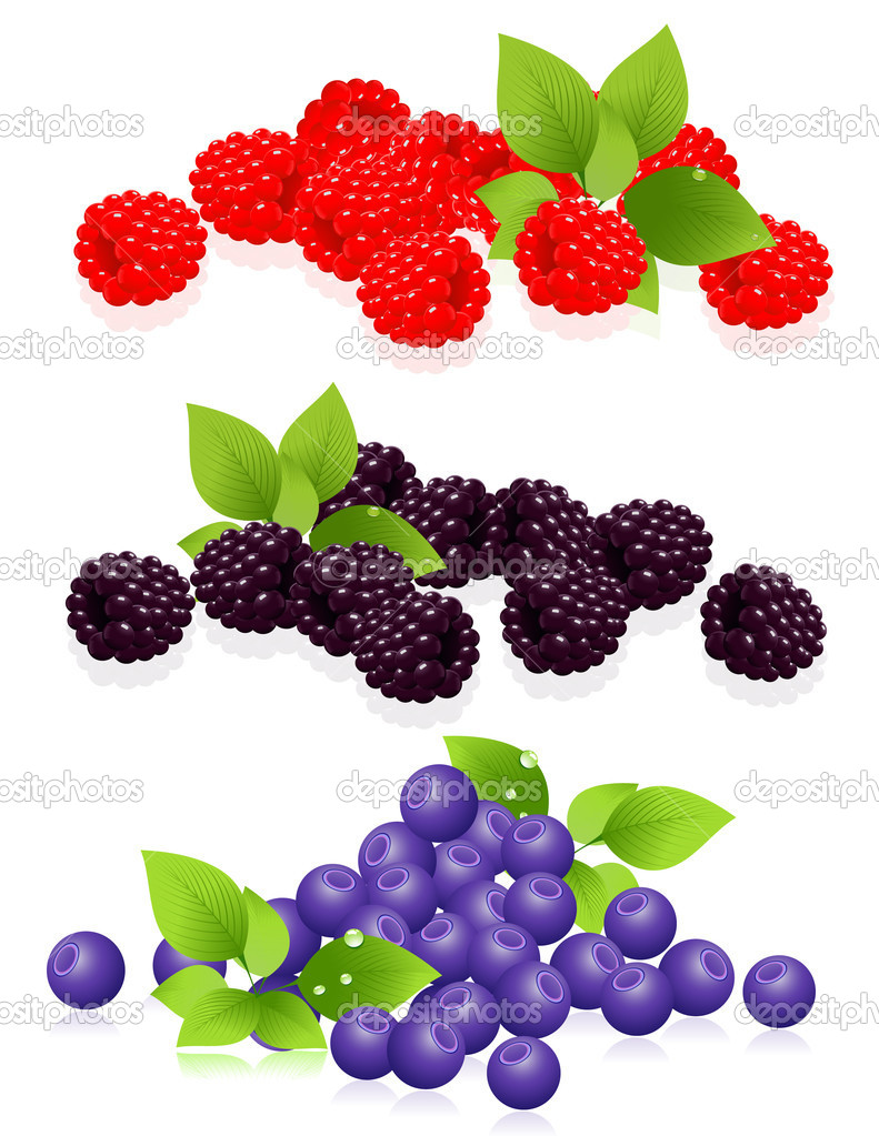 Forest berries, vector illustration — Stock Vector #1811838