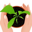 Growth in human hands — Imagen vectorial