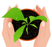 Growth in human hands — Stock Vector