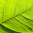 Leaf of plant — Stock Photo #1635883