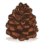 Pinecone — Stock Vector