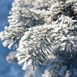 Fur-tree close-up — Stockfoto #1725451