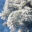 Foto Stock: Fur-tree close-up