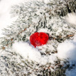 Red heart on fur-tree branches — Stockfoto