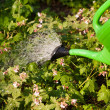 Royalty-Free Stock Photo: Watering of plants