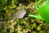 Watering of plants — Stock Photo