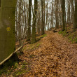 Forest track in winter — Stock Photo