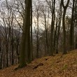 Deciduous forest in winter — Stockfoto #1767064