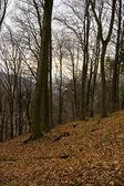 在冬季落叶森林 — 图库照片