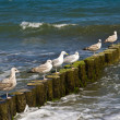 Sea gulls - Stock Photo