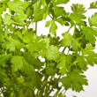 Parsley — Stock Photo #1789102