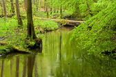 Forest and river in spring — Stock Photo