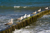 Sea gulls — Stock Photo