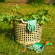 Stock Photo: Garden rubbish