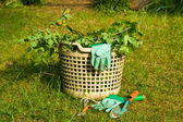 Garden rubbish — Stock Photo