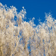 Foto Stock: Glazed frost
