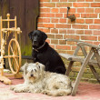Spinning wheel with two dogs - Stock Photo