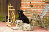 Spinning wheel with two dogs — Stock Photo