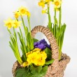 Basket with flowers — Stock Photo #2560075