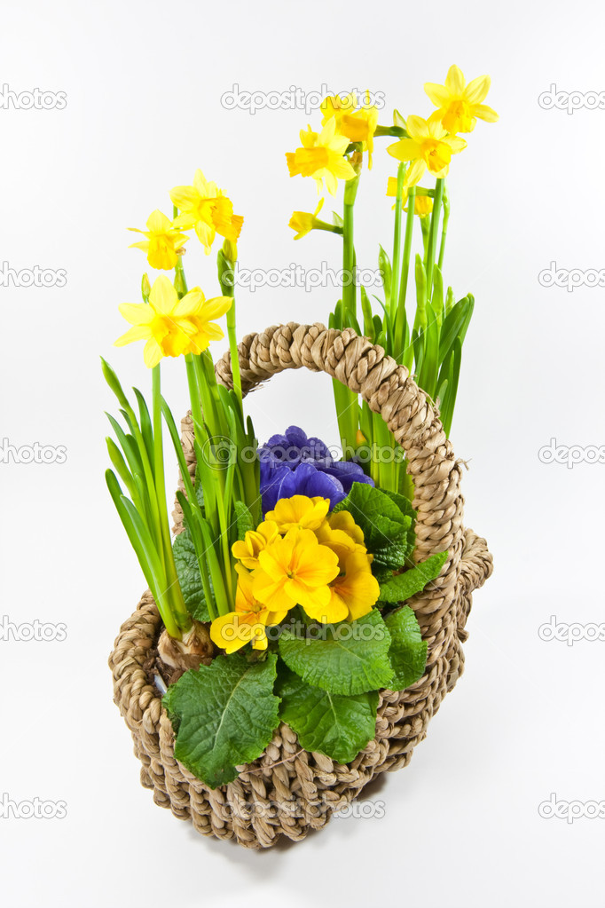 Basket with flowers — Stock Photo #2560088