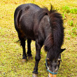 Stock Photo: Old pony