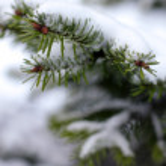 Christmas, evergreen tree and snow — Stock Photo