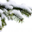 Christmas, evergreen tree and snow — Stock Photo #1654553