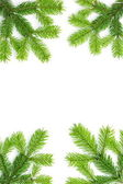 Christmas background with spruce tree — Stock Photo