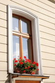 Window with flowers — Stock Photo