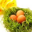 Ester egg on green — Stock Photo