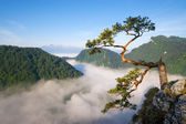 Sokolica Peak in Pieniny, Poland — Foto Stock