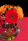 Wedding gerbera — Stock Photo