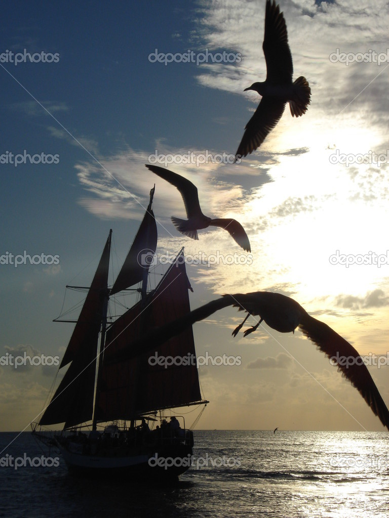Sailboat with three seagulls passing by at a sunset moment  Foto de Stock   #1603991