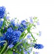 Bouquet of spring flowers — Stock Photo #1625064