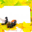 Stock Photo: Fall frame
