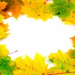 Fall frame with maple leaves — Stock Photo #1636458